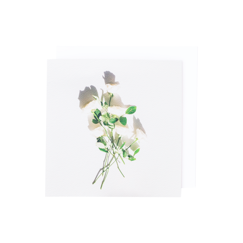 White-roses-fron